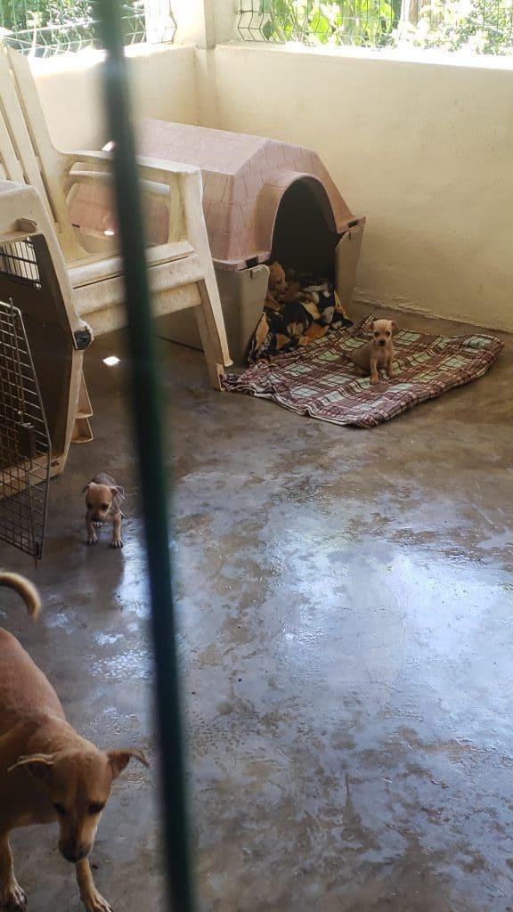 Mama dog at Las animas Dog Rescue