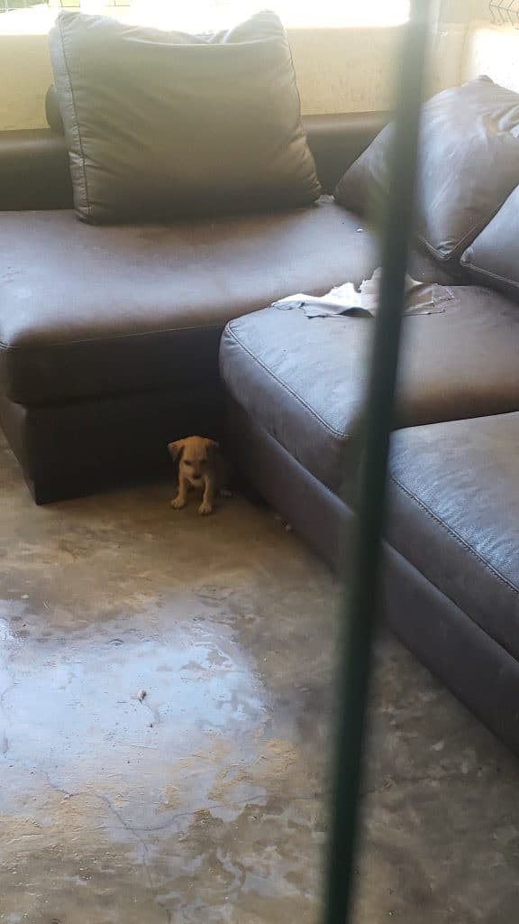 Saved Stray Puppy Las Animas Dog Rescue